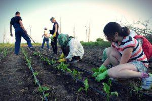 Міжрегіональна волонтерська організація SVIT Ukraine шукає партнерів