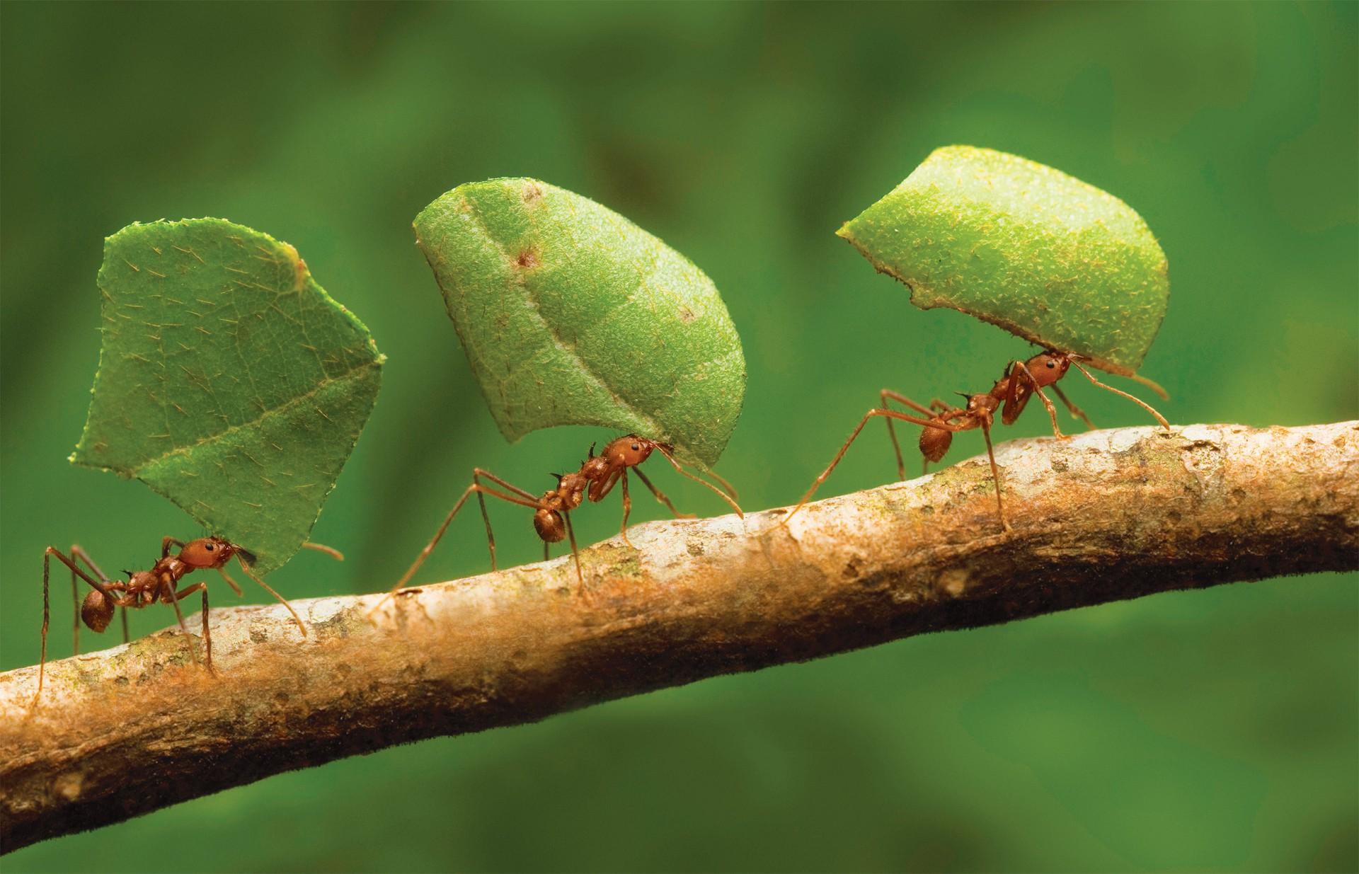 10 цікавих фактів про мурах