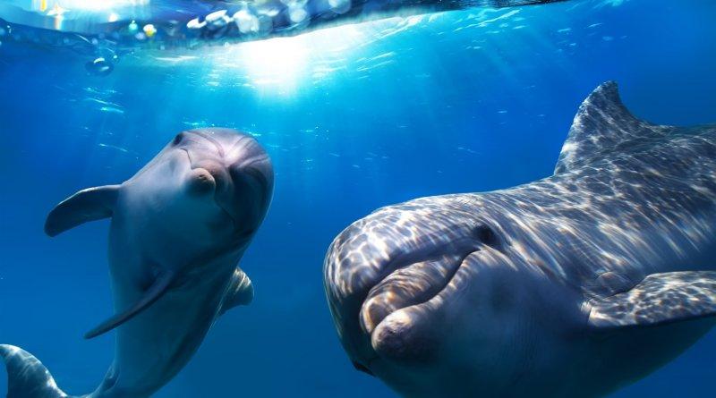 Факты о дельфинах, которых вы вероятно не знали!