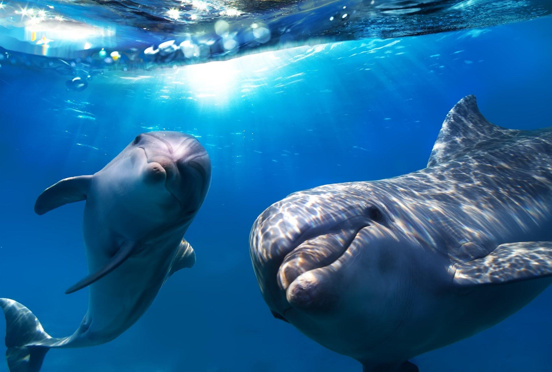 17 фактов о дельфинах, которых вы (вероятно) не знали.