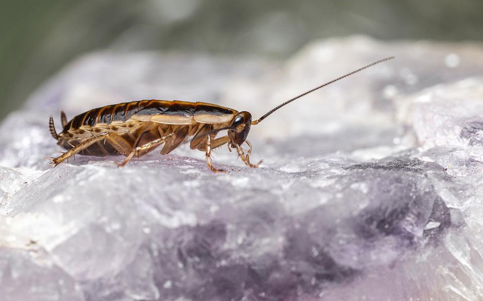 10 невероятных фактов о тараканах