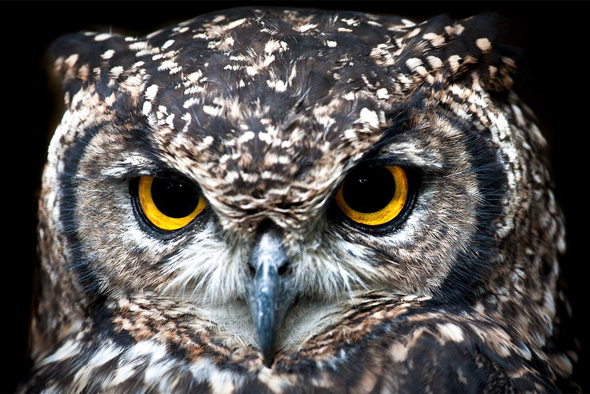 Лучшие глаза в мире животных