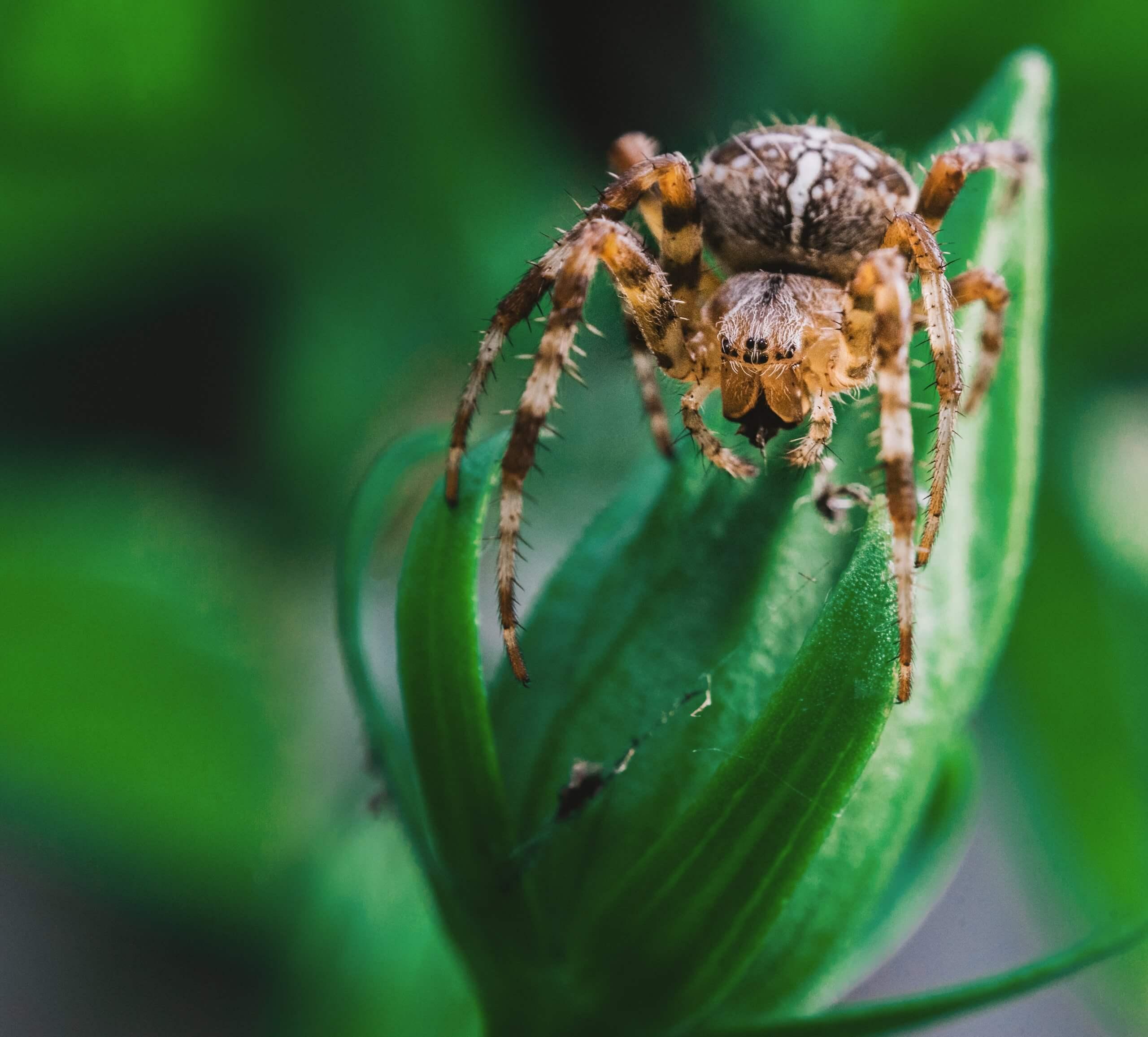 12 неймовірних фактів про павуків
