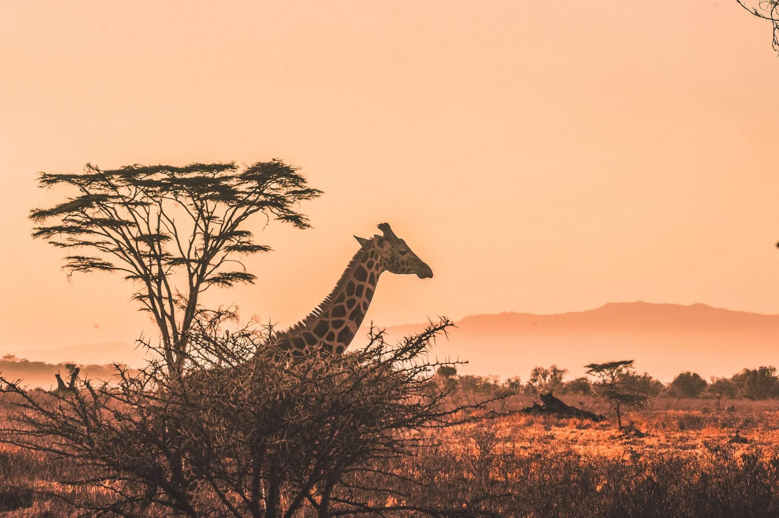 Екологічні проблеми Африки