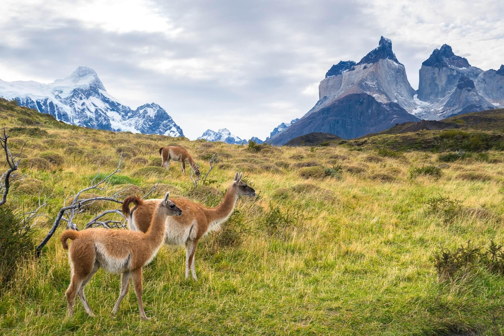 Восемь причин, по которым вы должны побывать в Южной Америке