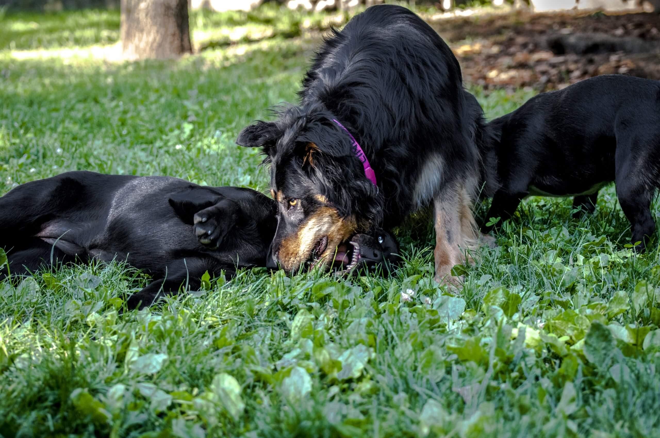 Собаки-рекордсмены