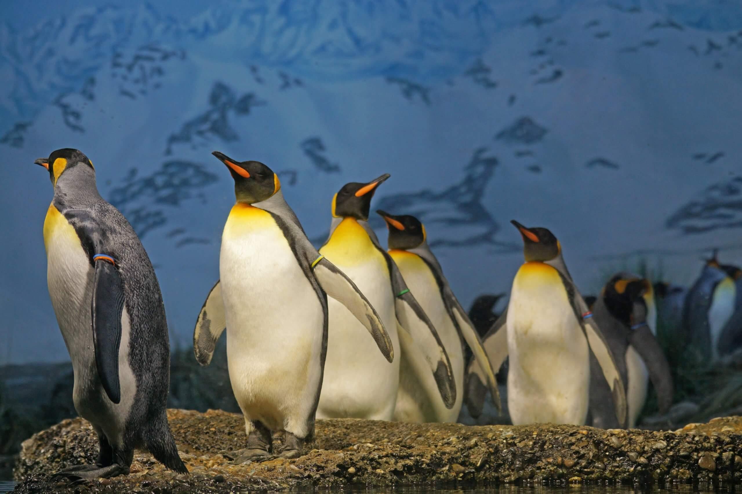 10 интересных фактов о пингвинах