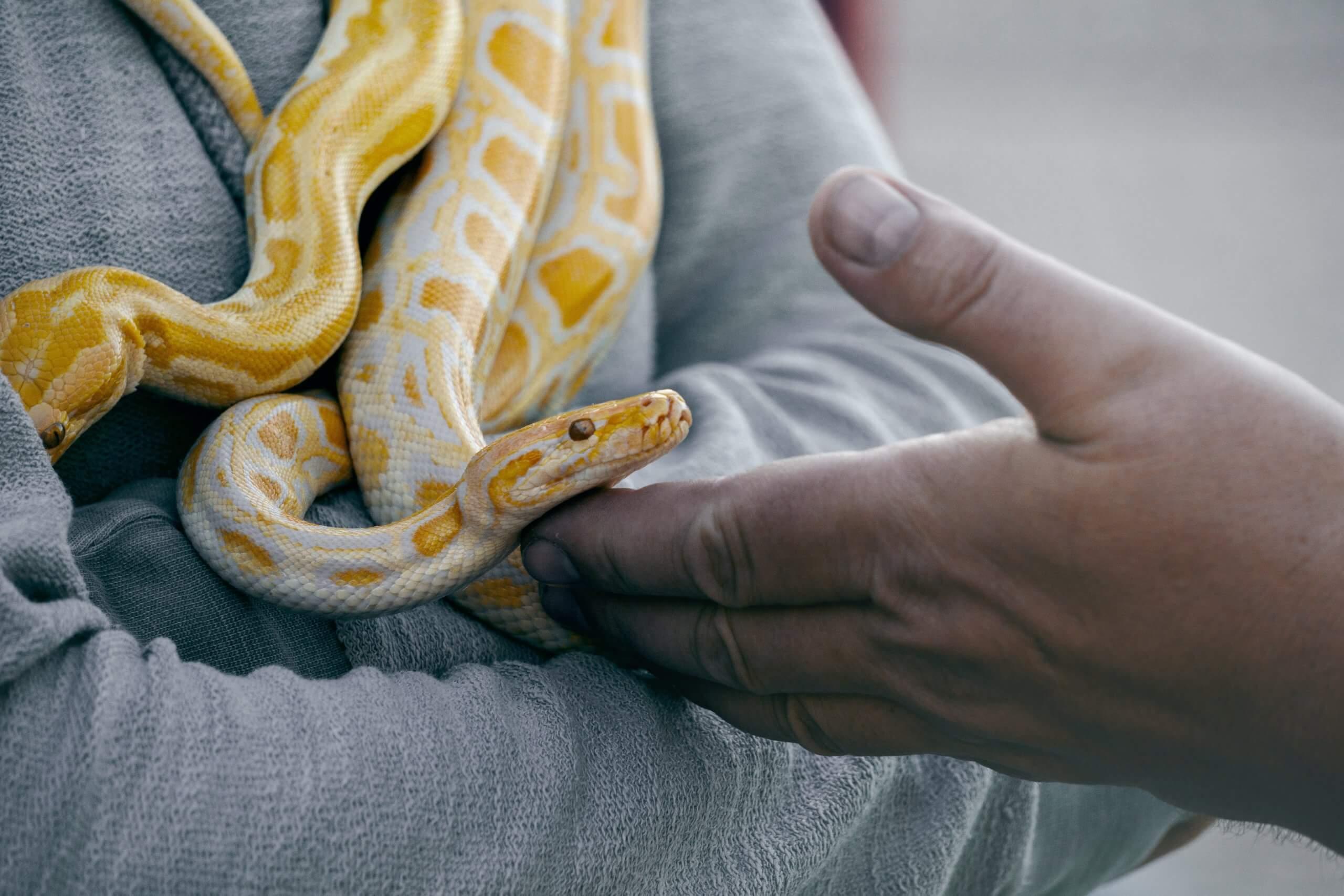 23 цікавих фактів про змій