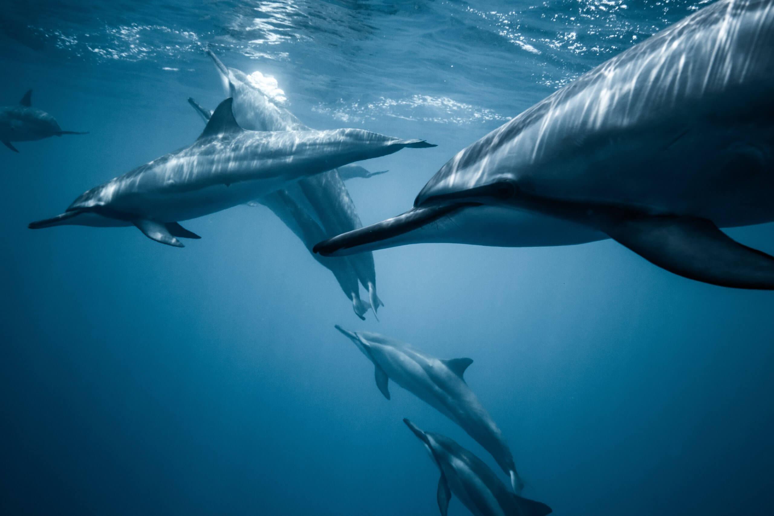 Що їдять дельфіни?