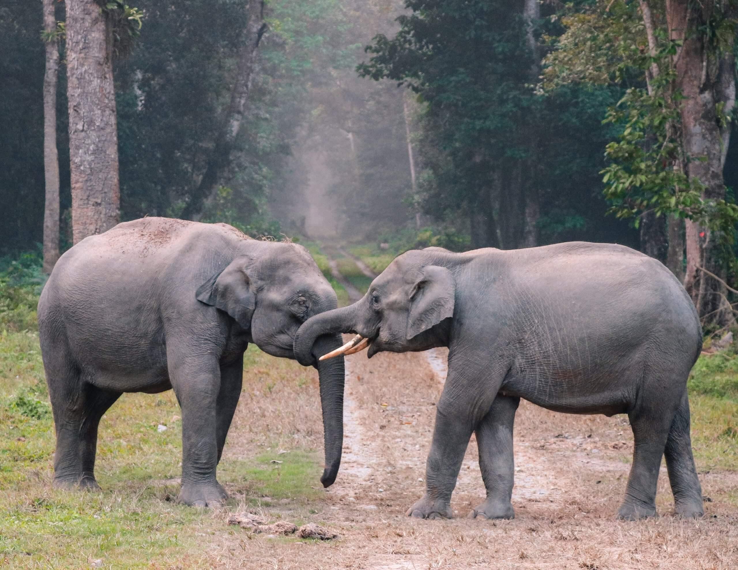 Як спілкуються тварини?