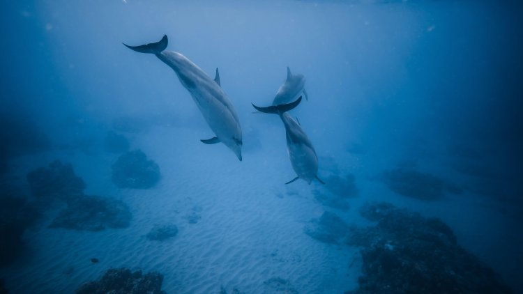Животный мир Тихого океана