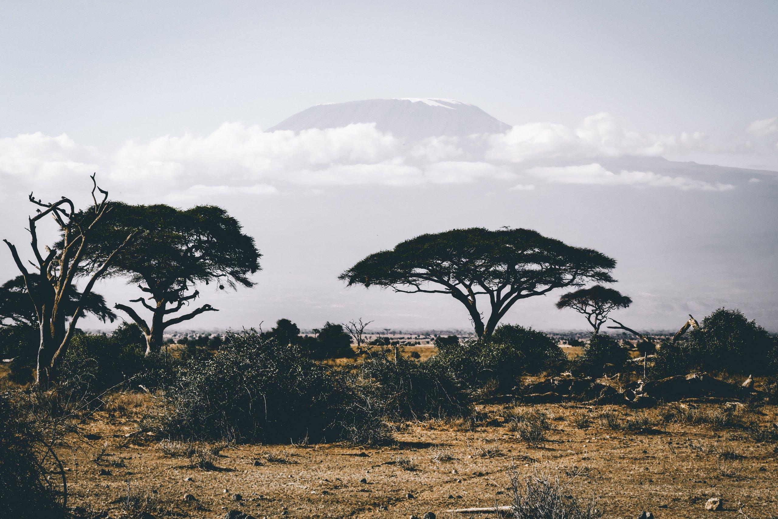 Цікаві факти про Африку, яких ви могли не знати