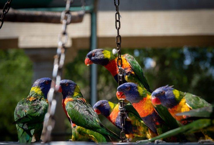 Цікаві факти про Квакерский папугах