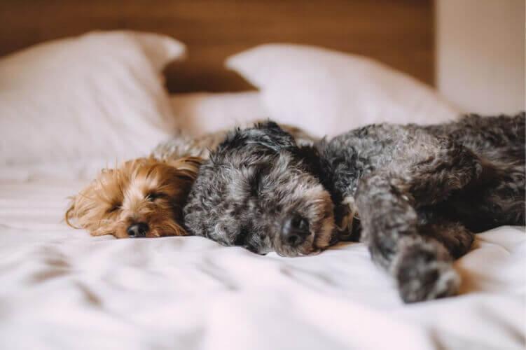 собаки, сплять
