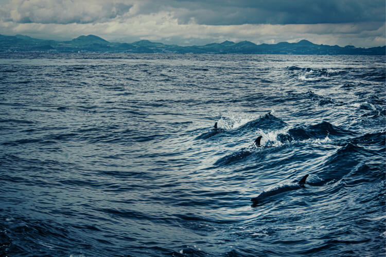 дельфины, факты