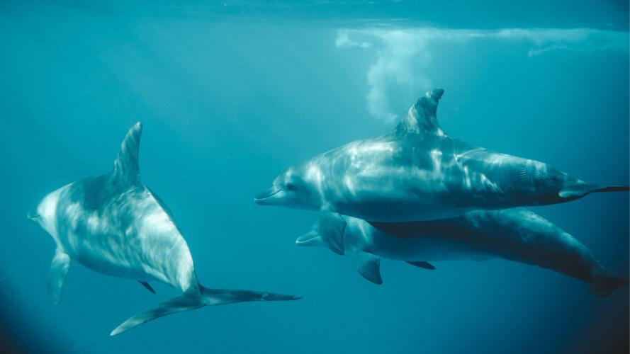 дельфины, регенерация