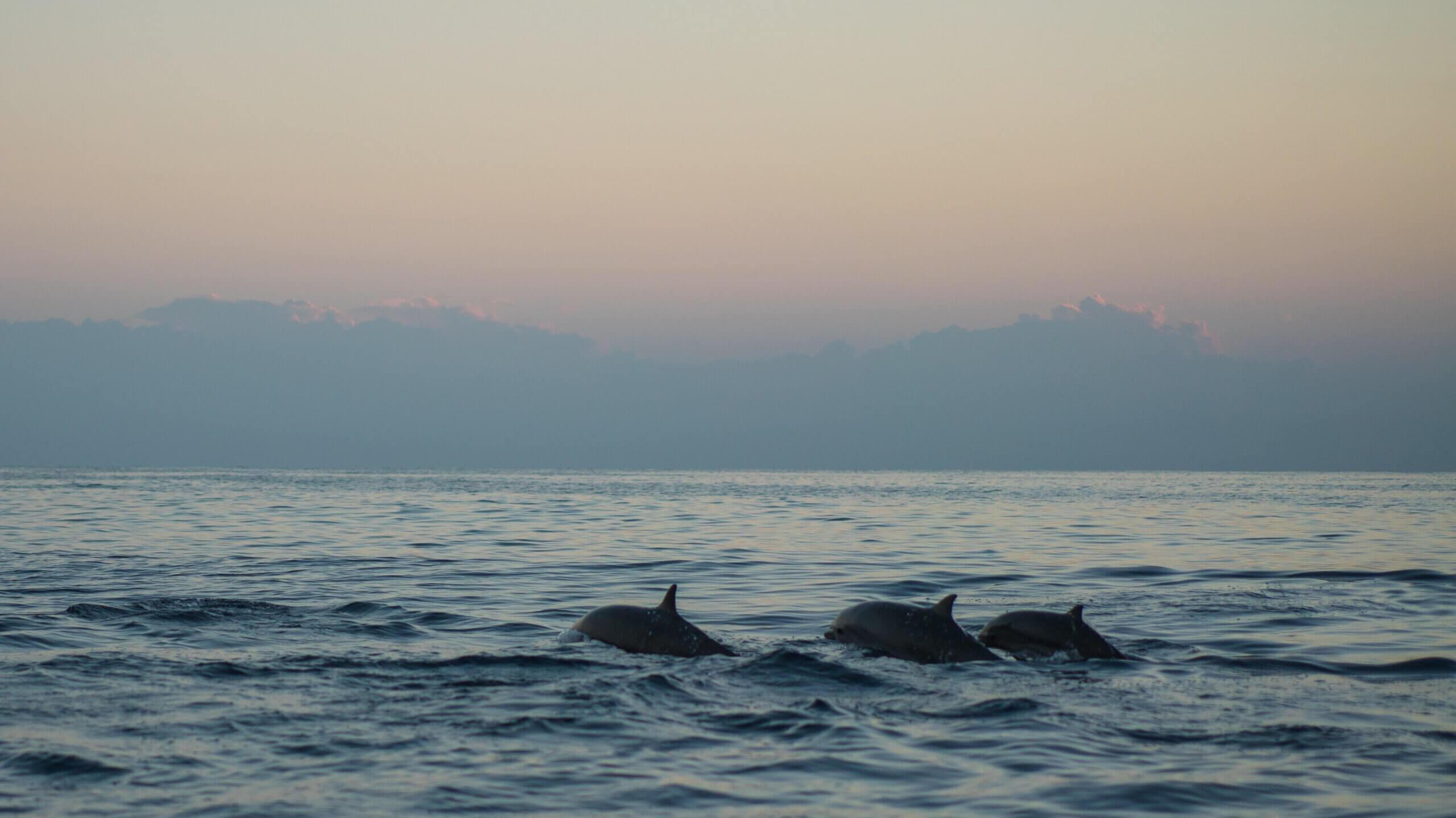 цікаві факти, дельфіни